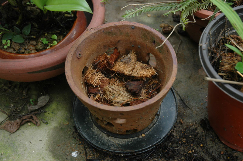 Cách trồng lan hồ điệp bằng xơ dừa