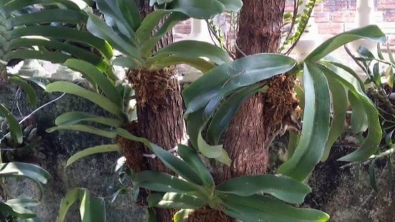 lan đai trâu ghép vào trụ gỗ