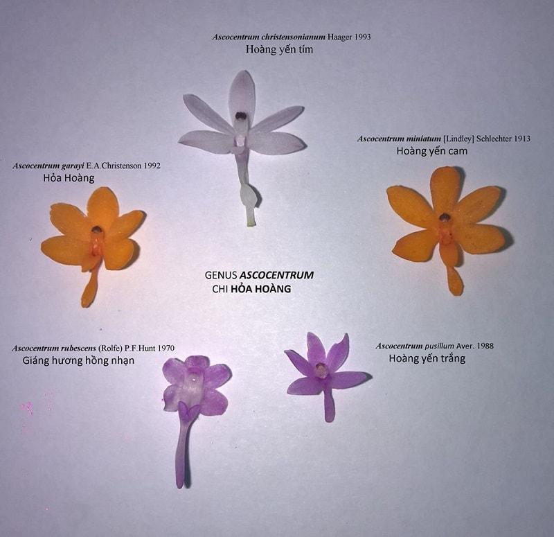 Màu sắc của hoa khi chụp ở ngoài có thể do sáng tối mà đậm nhạt khác nhau