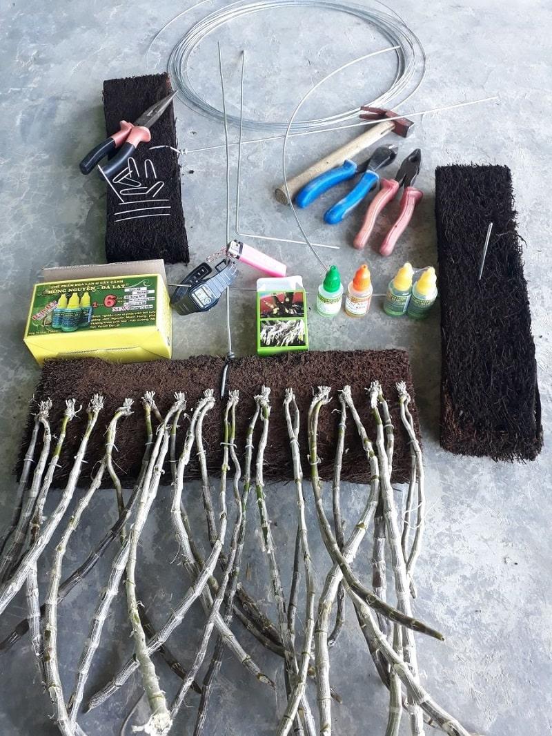 xử lý long tu trước khi trồng