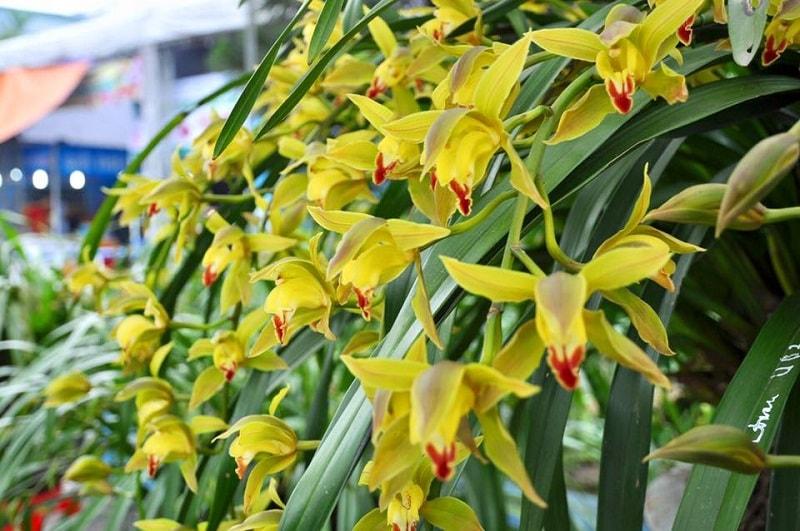 những cành hoa địa lan trần mộng