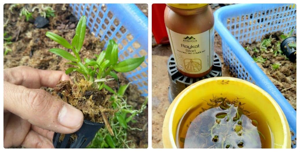 xử lý giá thể trước khi trồng