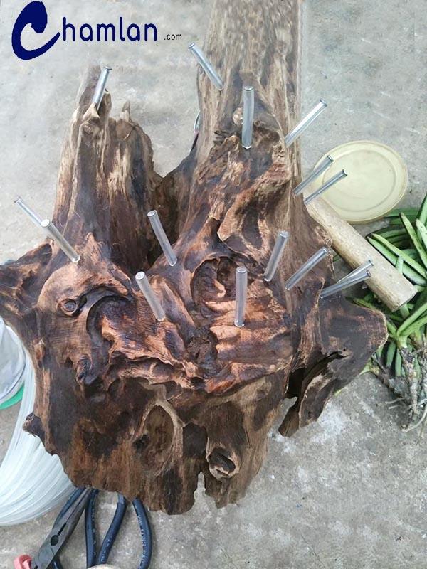 đóng đinh lên khúc gỗ để ghép lan