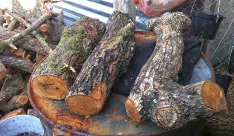 thân cây gỗ có thể ghép được cây lan