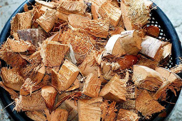 Hướng dẫn sử dụng xơ dừa để làm giá thể trồng hoa lan đúng cách